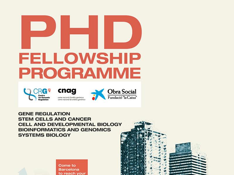 PhD Fellowship